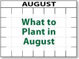 What to Plant in August and every other month. A standard guide not by zones adjust accordingly.