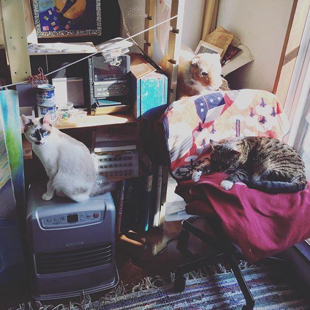 ゆとがいる部屋に居たいノア #ゆととノア#愛猫#猫のいる暮らし#猫のいる生活#多頭飼い初心者#キジトラ#シャムミックス#後追い猫#猫のいる幸せ#くつ下猫#ぶち猫