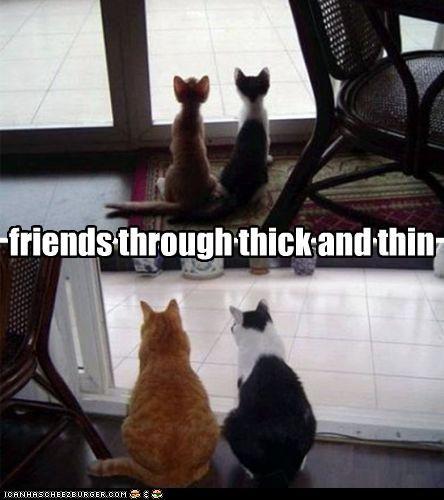 Hehe cats.