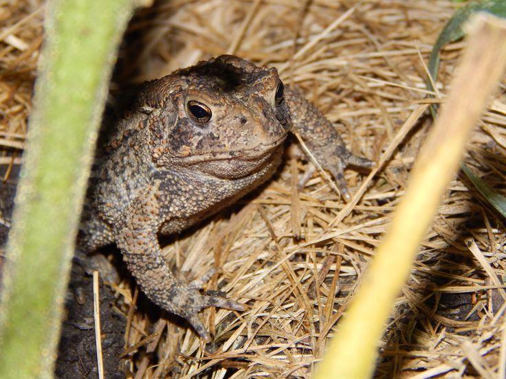 Look who I found in my garden. Animals, Lizard