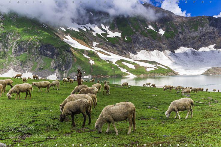 Sheep at Ratti Gali Lake Azad Kashmir Pakistan. by sprintsajid #landscape #travel