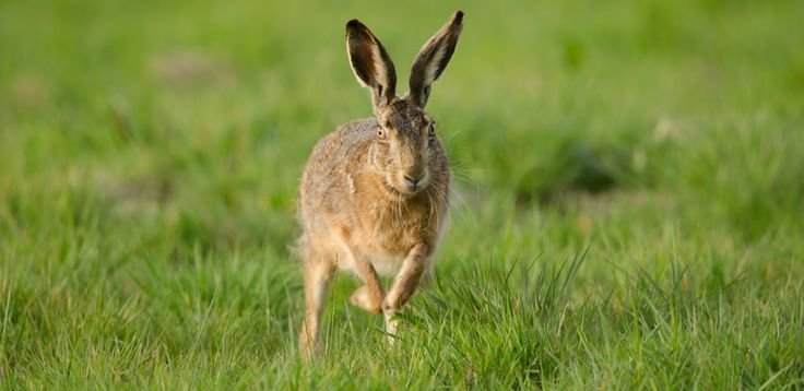 HARE: There is more to see in Tuscany than the beautiful towns and historic buildings.