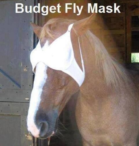 Never again will I pay a fortune for a fly mask