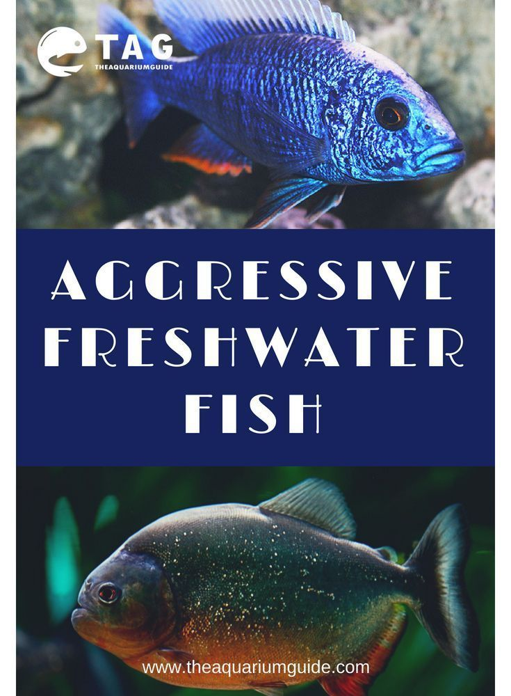Saltwater Aquarium Vs Freshwater Tank Pros Cons Freshwater Aquarium Fish Saltwater Aquarium Saltwater Fish Tanks