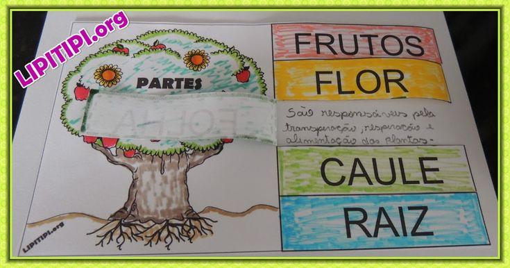 Atividade Recorte Colagem e Escrita Funções das Partes da Planta