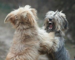 Por qué mi perro tiene problemas con otros perros