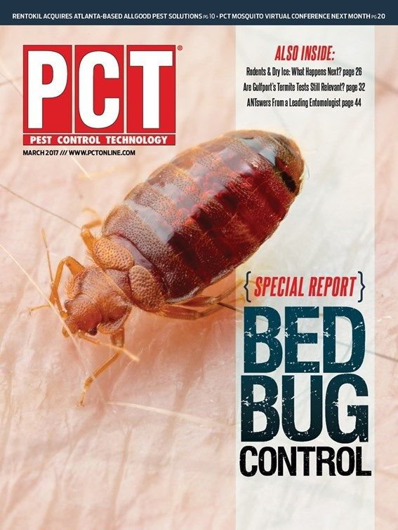 Different bed bug signs mean different things.