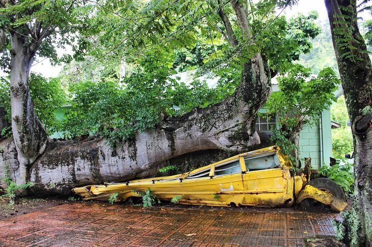 Have you heard of the island country of Dominica? Not to be confused with the Dominican Republic Dominica is its own vibrant country. In 1979 Hurricane David caused the tree to fall and smashed this school bus straight down the middle? Thankfully nobody was inside the bus but today this quirky attraction is the center of Dominica's Botanic Gardens  . . . #dominica #roseau #celebritycruises #caribbean #caribbeanbeauty #caribbeansea #wanderlust #abandonedplaces #nature #traveladdict #explore…