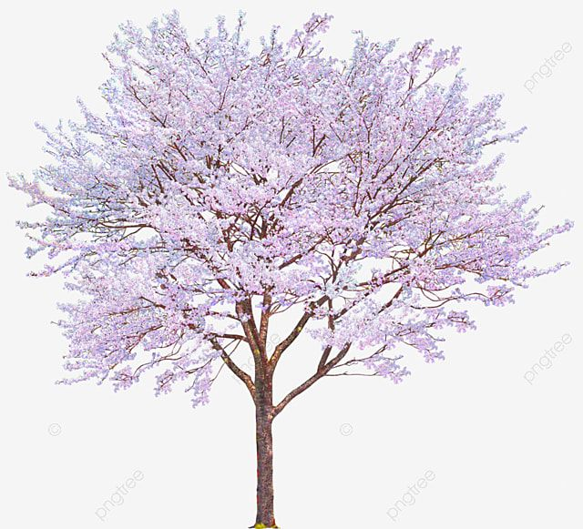 Pink Cherry Tree Cherry Decoration Pattern Tree Clipart Pink Cherry Tree Png Transparent Clipart Image And Psd File For Free Download Trees To Plant Cherry Tree Tree Psd