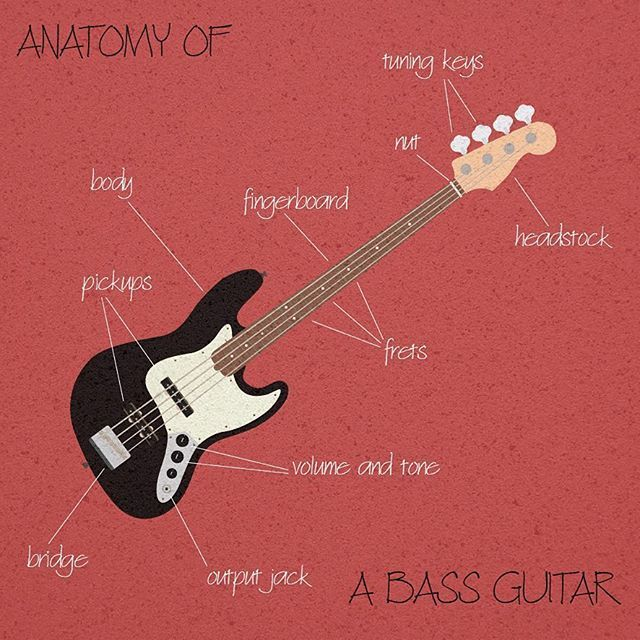 120 best Guitar images on Pinterest   Anatomy, Anatomy reference and ...