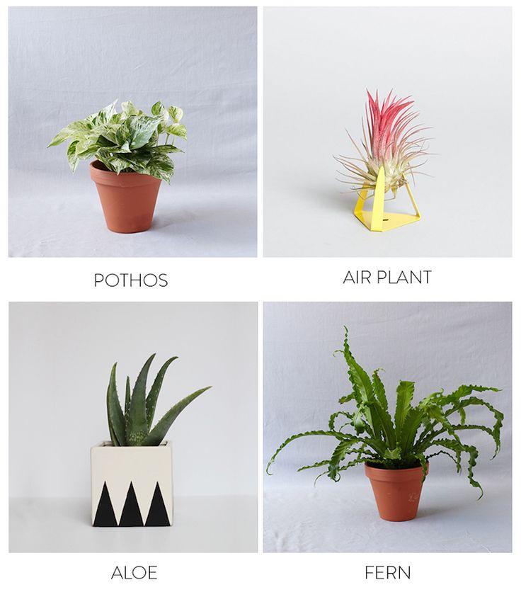 Bathroom Plants 96 best |bathroom plants| images on pinterest | bathroom plants