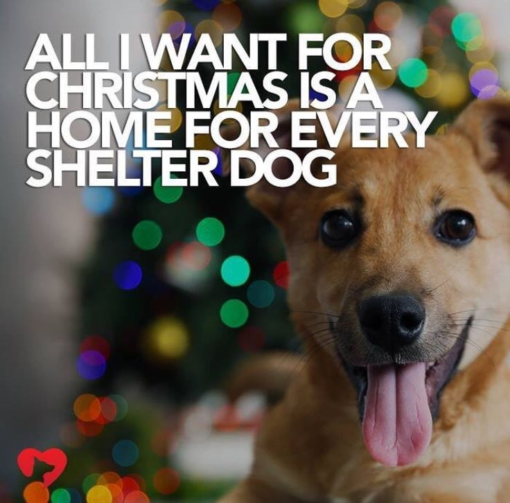 All I Want For Christmas Is A Home For Every Shelter Dog,,,,,,