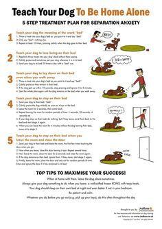 Koiran opettaminen yksinoloon. Tässä on ihan toimivat ohjeet koiralle, jolla ei ole yksinolo-ongelmia. Jos koiralla on eroahdistusta, ota yhteyttä ongelmakoirakouluttajaan.