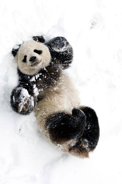 panda snow angel