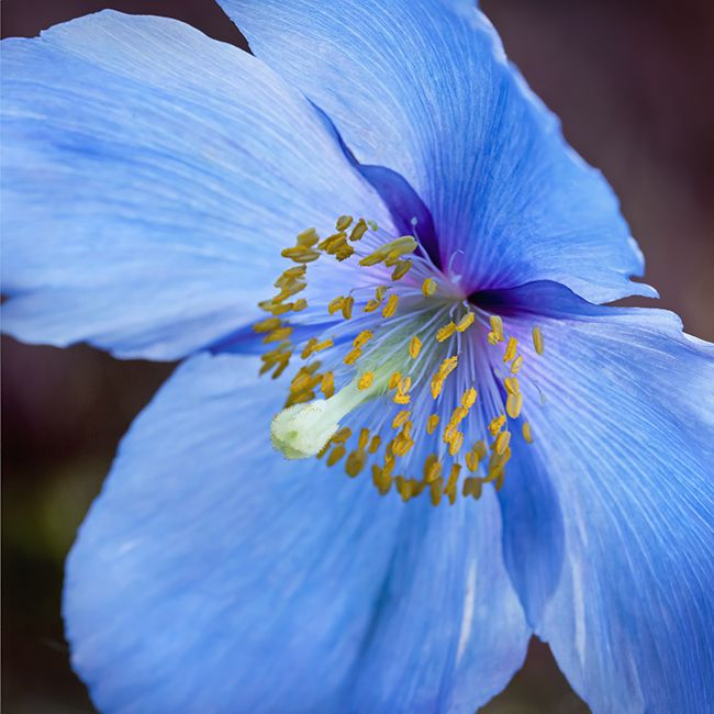 1000 Images About Columbine On Pinterest: 1000+ Images About Blooms & Gardens On Pinterest