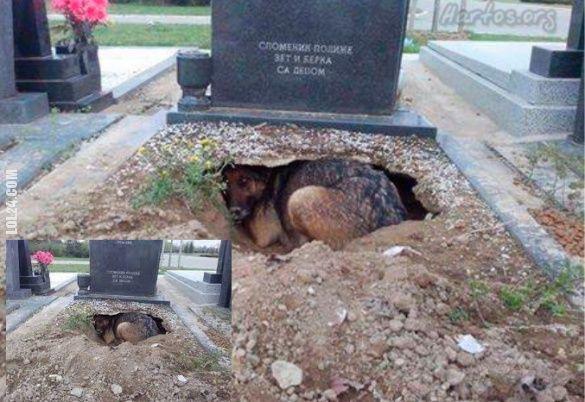 Pies prawdziwy przyjaciel człowieka #pies #prawdziwy #przyjaciel #człowieka