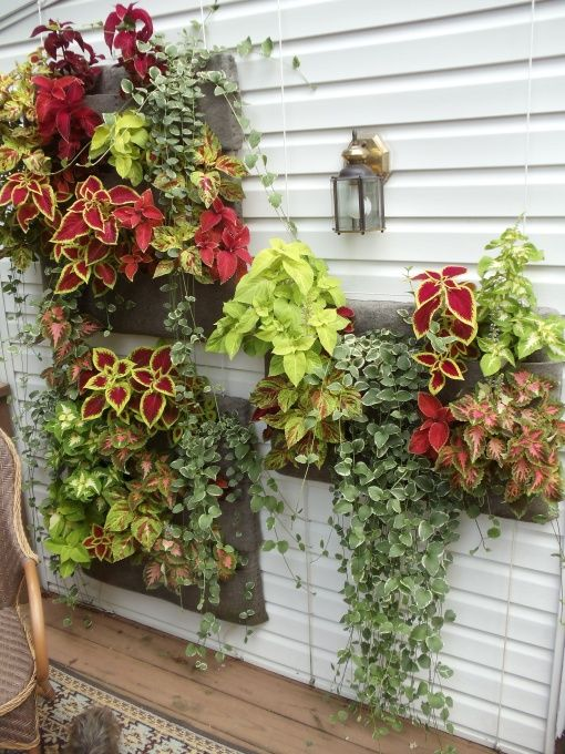 144 Best Images About Hanging Wall Planters On Pinterest