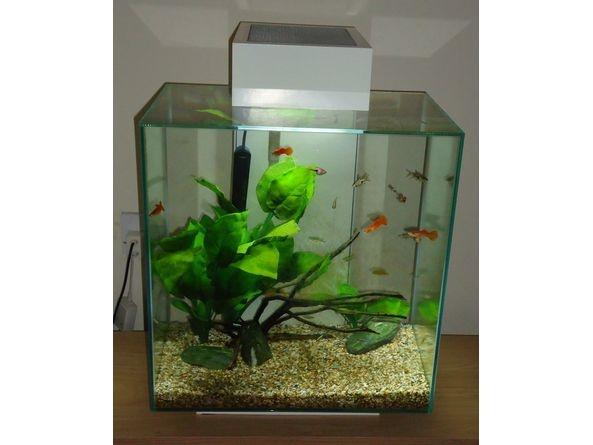 31 best images about fluval edge aquarium on pinterest for Fluval edge fish tank