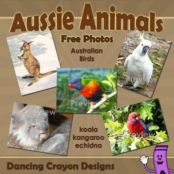 Beautiful free Photos of Australian Birds and Animals...what a great resource! I love Dancing Crayon Designs!