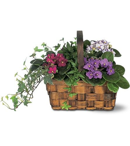 165 Best Images About African Violets On Pinterest