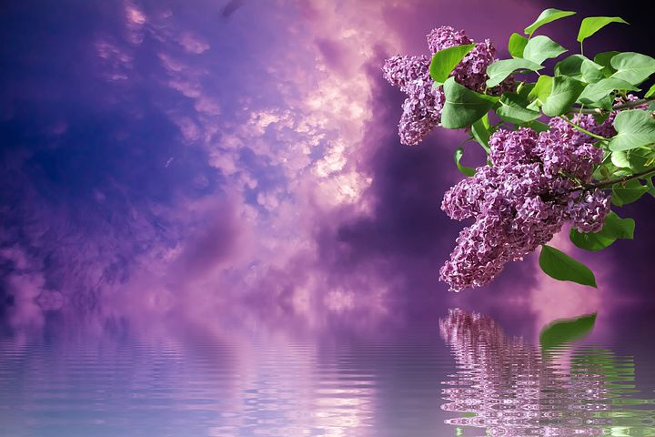 Best 25 Lilac Bedroom Ideas On Pinterest Color Schemes