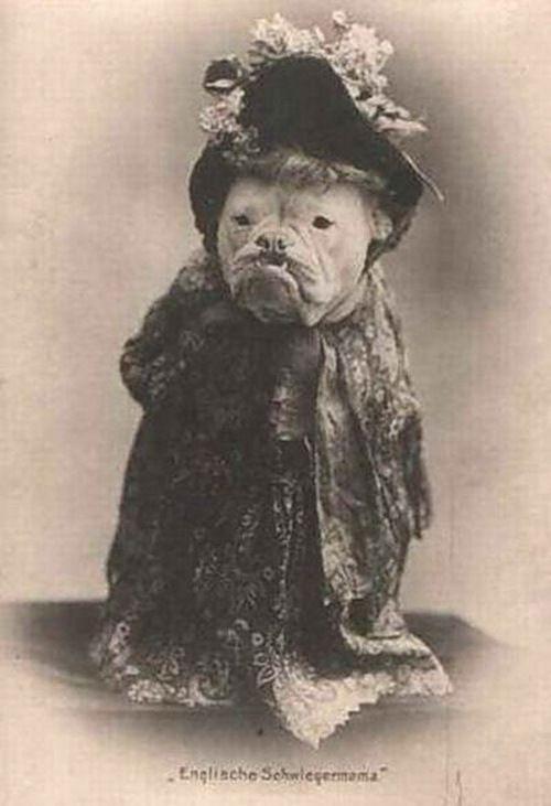 Weird Vintage- Victorian English bulldog
