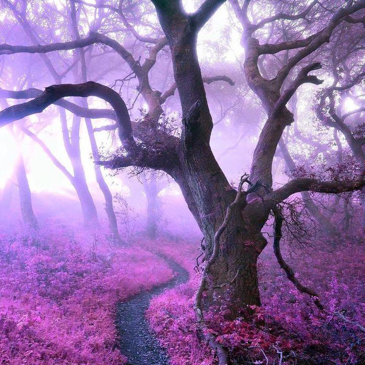 Historia drzew (4)
