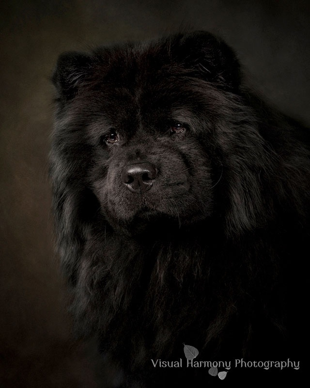 Striking portrait.  Black dogs can be tough to shoot, and this is amazing!  (photo by Jill Flynn)