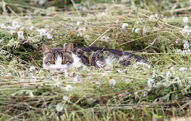 10 pruebas de que los gatos son animales muy astutos - Hogar Total