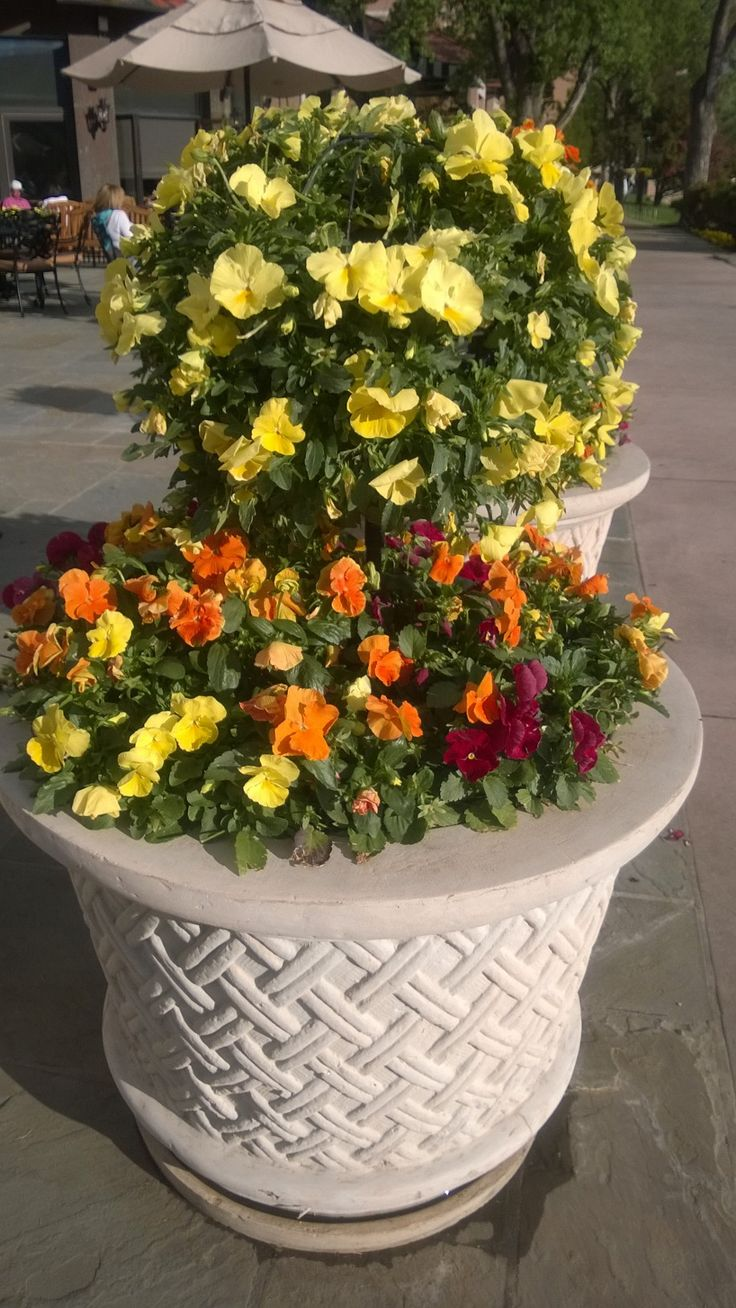 Beautiful flower container at the Broadmoor in Colorado Springs
