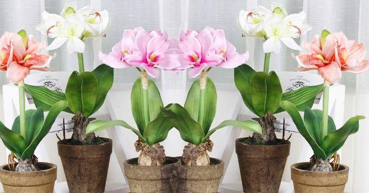 """Vămai aduceți aminte când ultima dată plantele dvsau înflorit la fel ca cele din florării? Ați dori să aveți acasă astfel de flori? Secretul înfloririi bogate a plantelor de apartament este simplu – toate plantele vor să """"mănânce"""". Nu veți avea nicicând plante viguroase și frumos înflorite, dacă le vei ține la dietă! De cele mai multe ori lipsa de vitamine duce la îmbolnăvirea plantelor. De aceea este necesar să asigurați planta cu substanțe nutritive suficiente, nu doar cu apă. Mâncarea…"""
