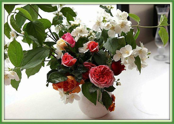 Цветы | Записи в рубрике Цветы | Желнов Александр : LiveInternet - Российский Сервис Онлайн-Дневников