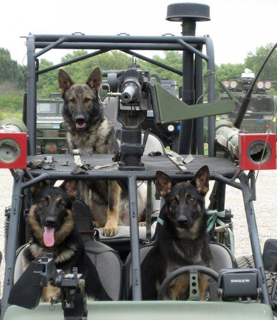 New National Monument Honors Military Service Dogs
