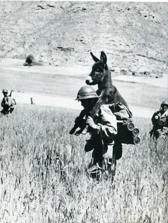 War and it's casualties I want to know why we send men who will save a donkey off too kill other men.