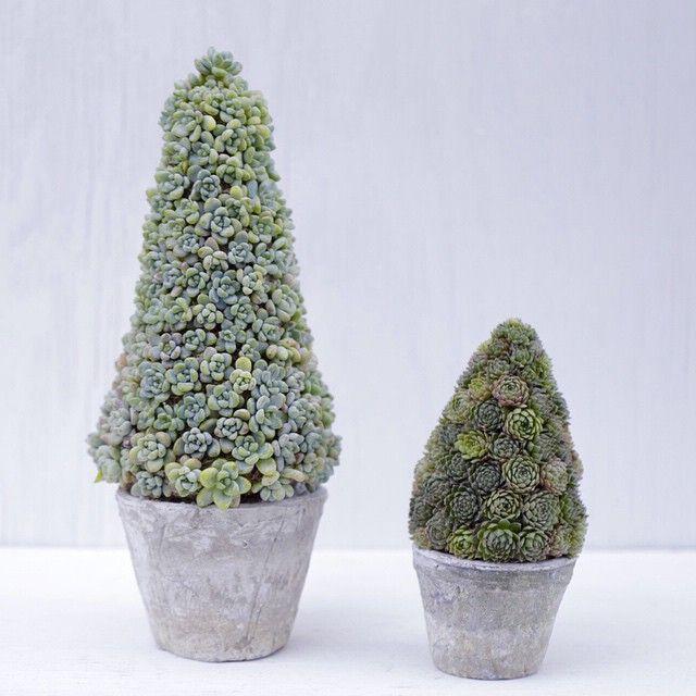 Succulent Christmas Trees By Dalla Vita Dalla Vita