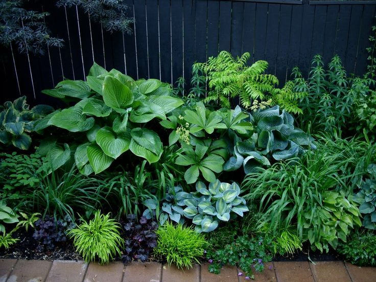 beautiful green design sometimes texture and form shows up better in a garden than just