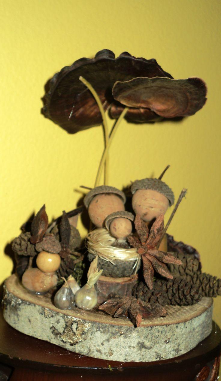 Os cogumelos secos servem como sombrinhas