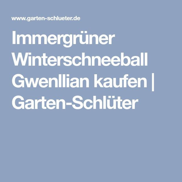 Immergrüner Winterschneeball Gwenllian kaufen | Garten-Schlüter
