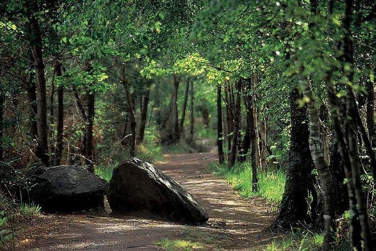 La forêt de Brocéliande ou la forêt de Paimpont en Bretagne © CRT Bretagne Isabelle Kurschner