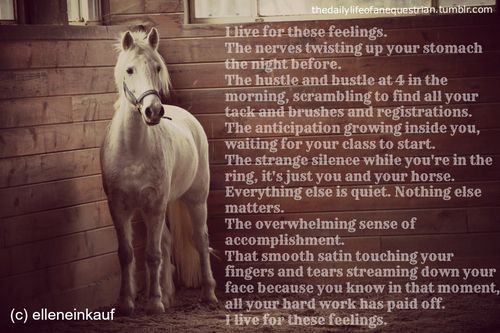 """""""Horse Show Life""""  I live for these feelings….  well. this started out as a good idea…  it didn't COMPLETELY fail or anything  but this is my experience with shows"""