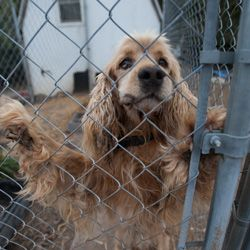Stop Puppy Mills - It Starts With YOU  Help stop this cycle of cruelty simply by choosing to adopt your next pet from a shelter or rescue.