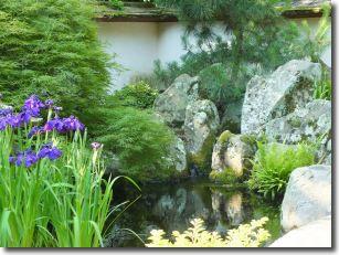 Irises garden plant list pinterest japanese gardens for Plants found in japanese gardens