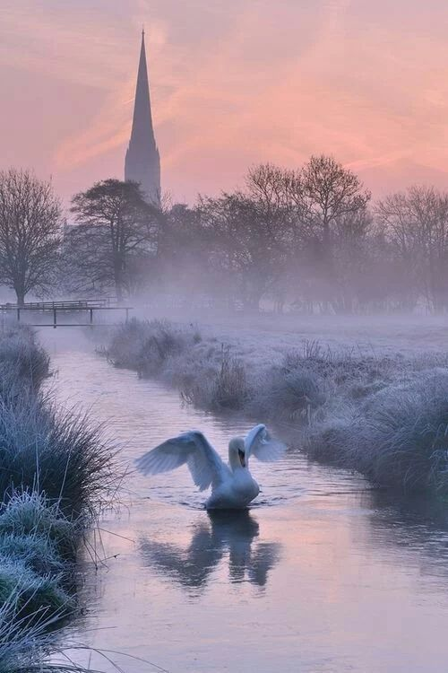 The beautiful swan  The color scheme killing  Fog and swan