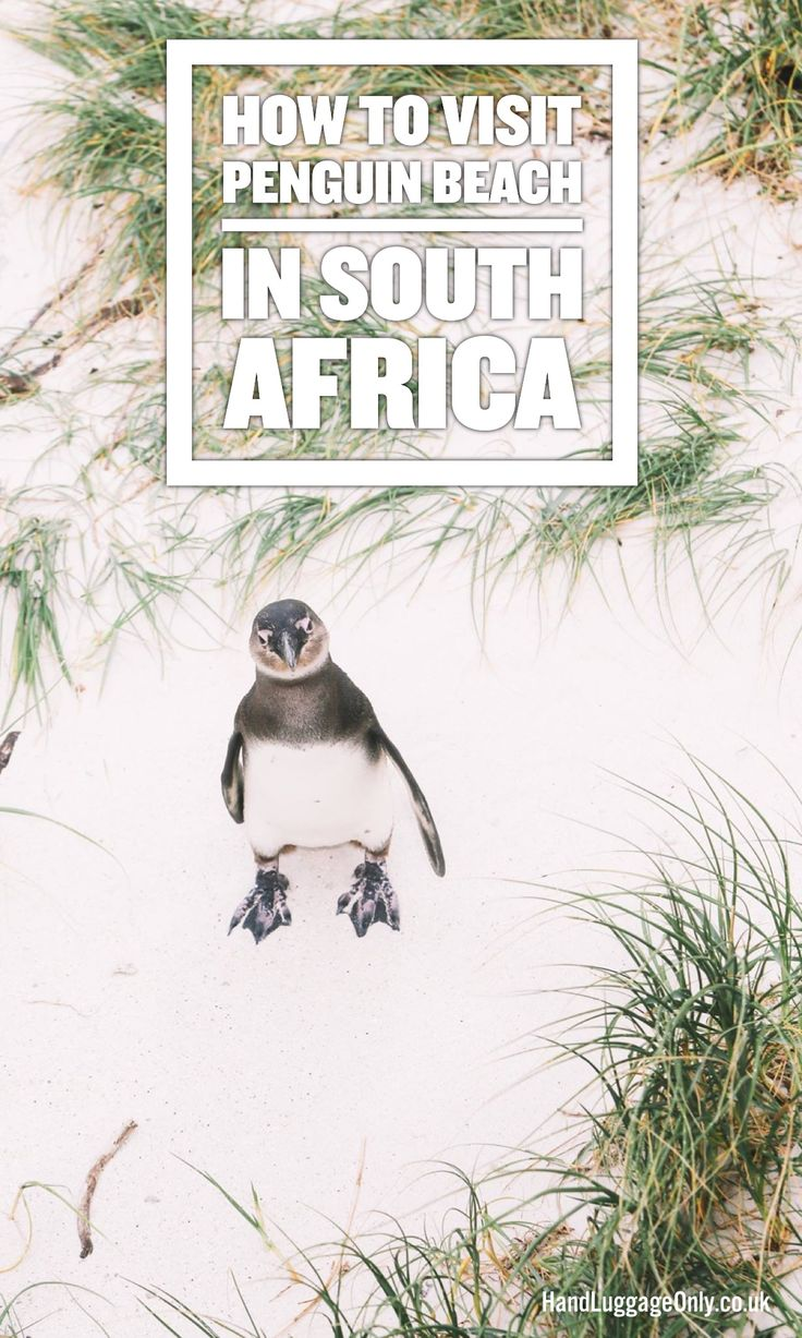 How To Visit Penguin Beach In South Africa - Hand Luggage Only - Travel, Food…