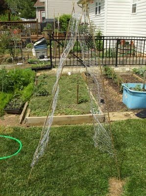 How to Build a Low Cost Garden Vegetable Trellis: About 10 Bucks!