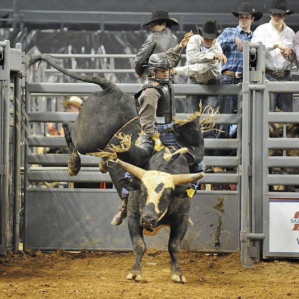 Bull: Uno. Teague Bucking Bulls - UNO