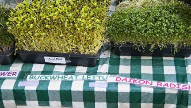 C mo sembrar germinados de leguminosas y hortalizas en for Como cultivar peces en casa