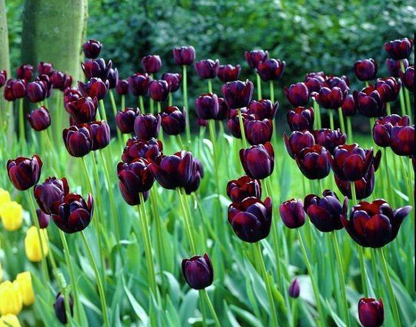 personaliza-tu-jardin-con-plantas-y-flores-negras-01