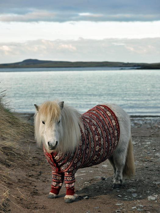 Mini hipster pony in ironic sweater. Because miniature ponies hate burgundy. So ironic.