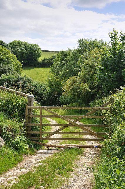 Cornish Lane in Summer | Cornwall